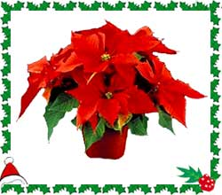Poinsettia Order Form, Click Here!